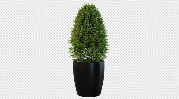 흰색 배경에 고립 된 녹색 식물