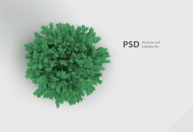 分離された緑の植物