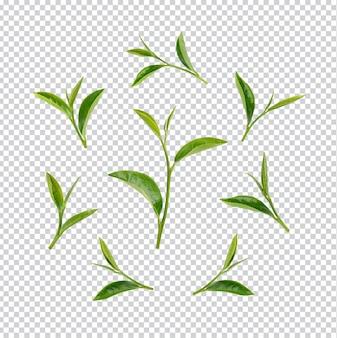 Листья зеленого чая изолированные premium psd