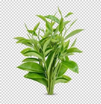 緑茶の葉が分離されたプレミアムpsd