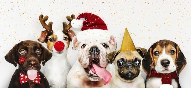 Группа щенков в рождественских костюмах для празднования рождества