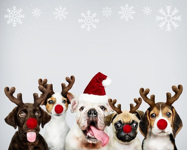 크리스마스를 축하하기 위해 크리스마스 의상을 입고 강아지의 그룹