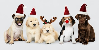 Group of puppies wearing Christmas hats to celebrate Christmas