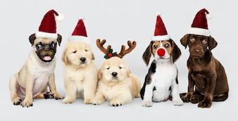 クリスマスを祝うためにクリスマスの帽子をかぶっている子犬のグループ