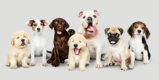 사랑스러운 강아지의 그룹 초상화