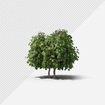 Hazel tree isolated rendering with shadow
