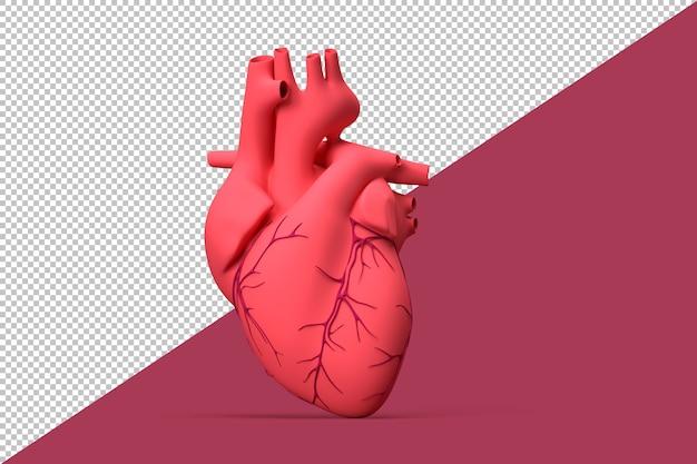 Illustration of realistic human heart