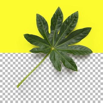 Изолированные крупным планом вид зеленого листа