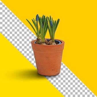 茶色のポットに新鮮な植物を分離