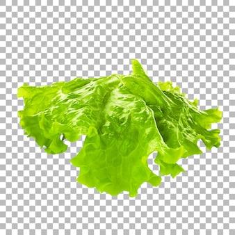 투명도에 고립 된 신선한 야채