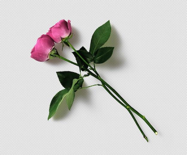 Изолированные розовые розы png объекты клипарт