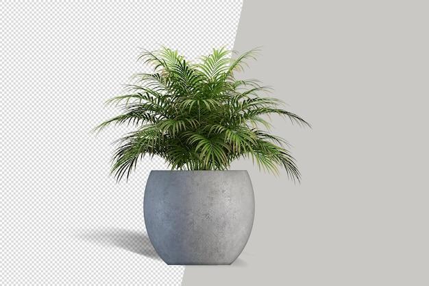 鉢植えの孤立した植物