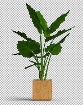 Изолированное растение в горшке