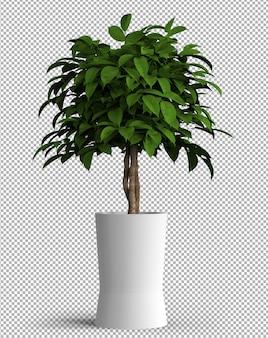 鍋に孤立した植物