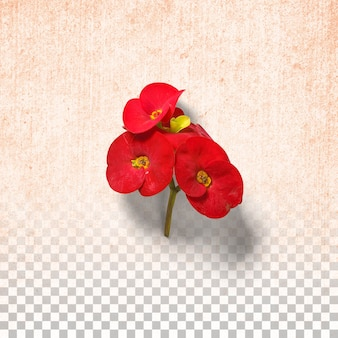透明な背景に孤立した赤い花