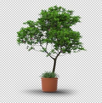 Изолированное дерево. прозрачная стена. передний план.