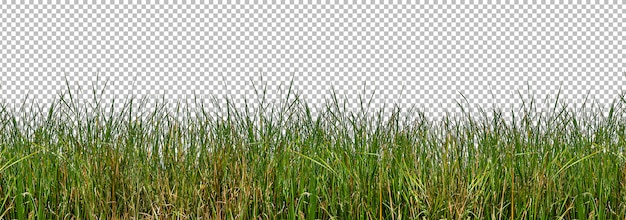 Isolated wild grasses