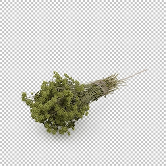 Isometric kitchen herbs