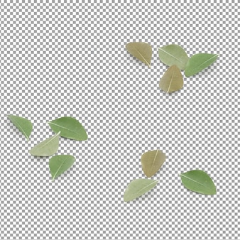 Isometric leaves