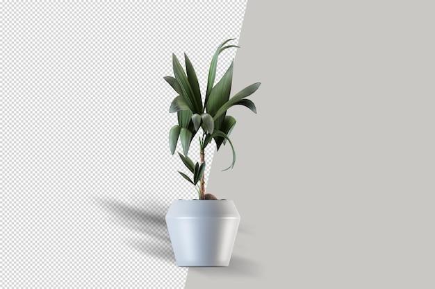 等尺性植物の3dレンダリング