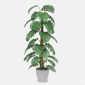 分離された3 dレンダリングで等尺性植物