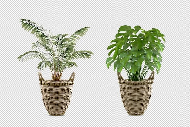 Изометрические растения в корзине 3d-рендеринга изолированные