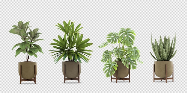 Изометрические растения в горшке 3d-рендеринга изолированные