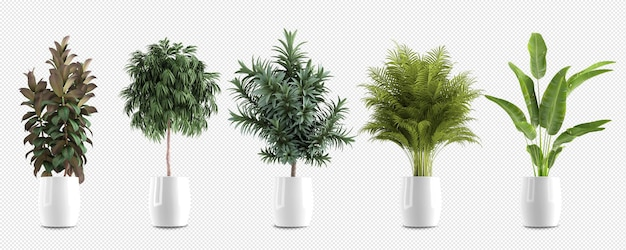 Isometric plants in pot 3d rendering isolated