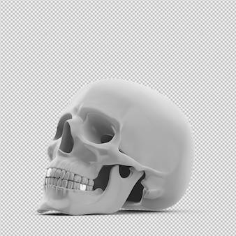 Изометрические череп 3d изолированные визуализации