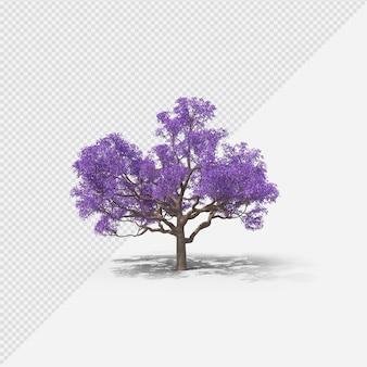 Jacaranda tree isolated rendering with shadow