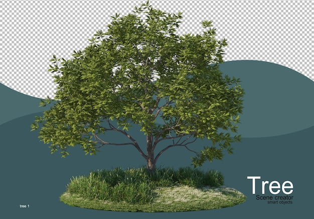 A large tree in the middle of the field