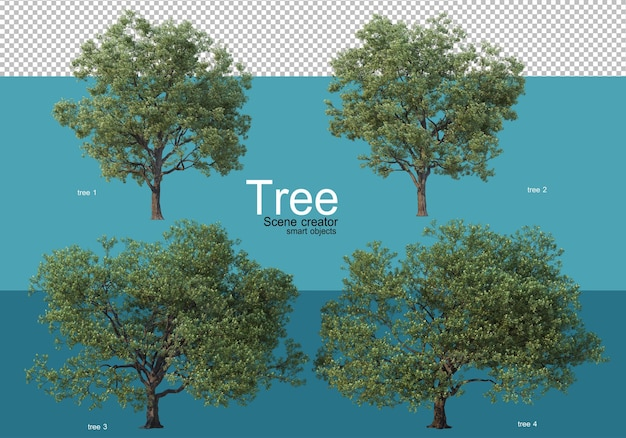 Large trees of various shapes