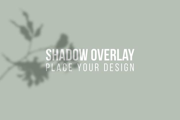 Оставляет наложение теней и эффект наложения теней на окнах прозрачная концепция
