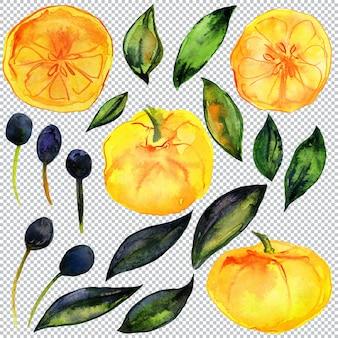 Лимонно-оливковый сад. акварельные элементы цитрусовых и оливковых растений. плоды, листья и ветки