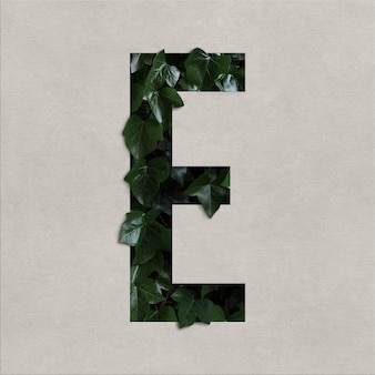 Letter e alphabet concept with hedera
