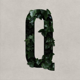 Letter q alphabet concept with hedera