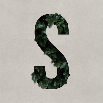 Letter s alphabet concept with hedera