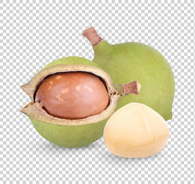 Орехи макадамия изолированные