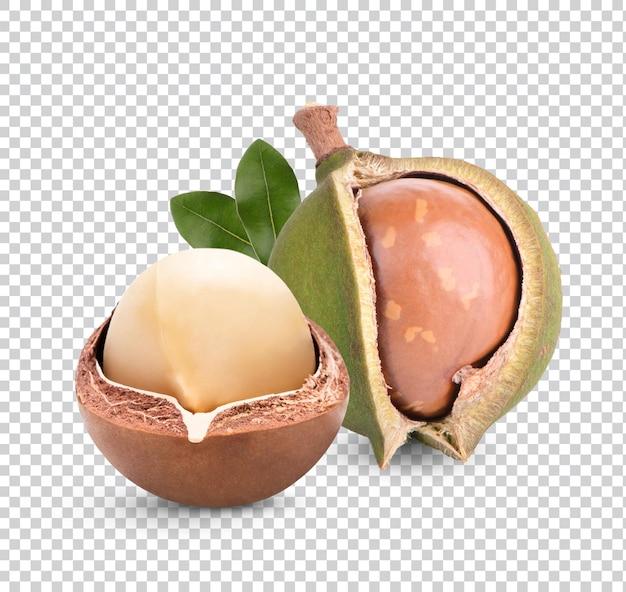 Орехи макадамия с листьями изолированного рендеринга