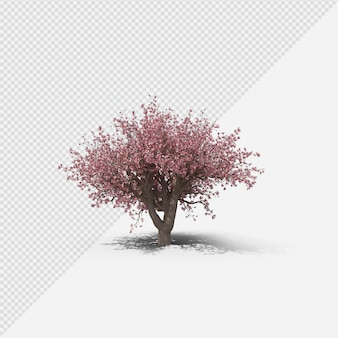 Magnolia tree isolated rendering with shadow