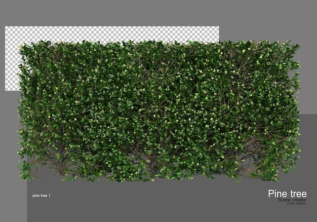 다양한 종류의 소나무 정원