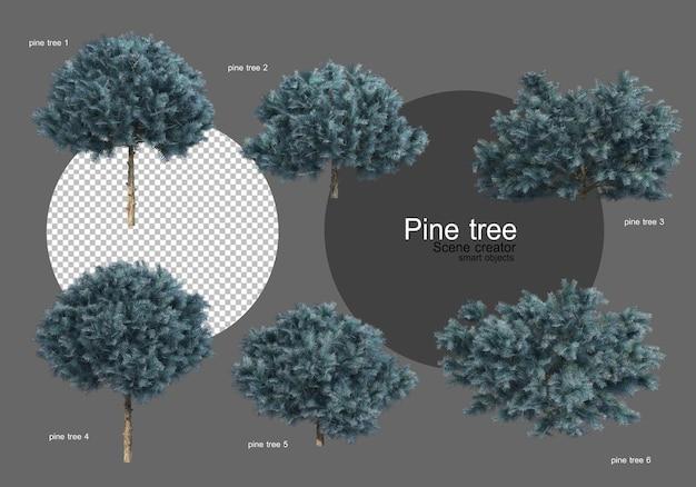 다양한 종류의 소나무