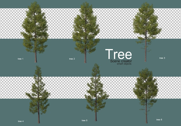 나무의 많은 다른 유형
