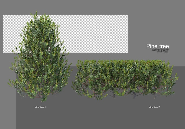 Many different types of pine gardens