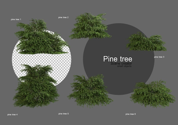 Many different types of pines