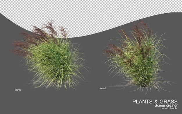 Many types of grasses