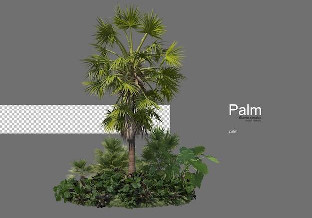 多くの種類のヤシの木