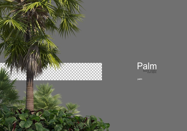 Many types of palm trees
