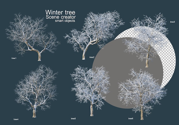 Many types of trees in winter
