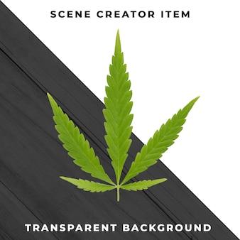 Листья марихуаны, изолированные с обтравочный контур.